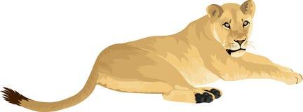 Weibliche Löwin Löwe des Vektors Stockfoto