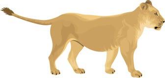 Weibliche Löwin Löwe des Vektors Lizenzfreie Stockfotos