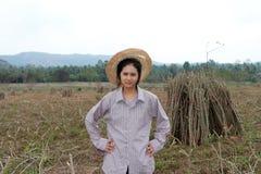 Weibliche Landwirtstellung mit in die Seite gestemmtem und das Glied der Tapiokaanlage, das den Stapel zusammen in den Bauernhof  stockfoto