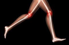 Weibliche medizinische skeleton Fahrwerkbeine in laufender Haltung Stockfotografie