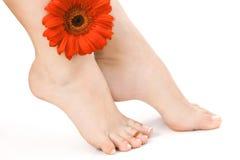 Weibliche nackte Beine mit Blume über weißem Backgroundked Lizenzfreie Stockfotografie