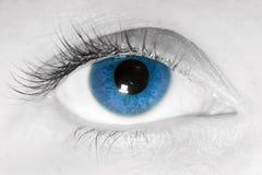 Weibliche Nahaufnahme des blauen Auges Stockbild
