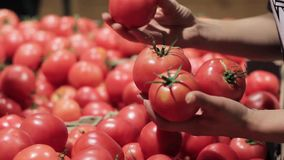 Weibliche ` s Hand wählt Tomaten im Supermarkt vor stock video