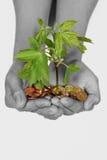 Weibliche Schwarzweiss-Hände mit Münzen Stockbild