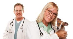 Weibliche tierärztliche Doktoren mit kleinem Welpen Stockbild