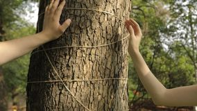 Weibliche und männliche Hand berührt die Barke eines Ahorns, der mit einem Handwerksseil verziert wird stock footage