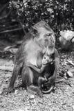 Weiblicher Affe mit Baby Lizenzfreie Stockfotografie