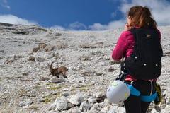 Weiblicher Bergsteiger, der einen Steinbock fotografiert stockfoto