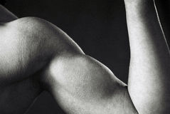 Weiblicher Bodybuilder stockbilder