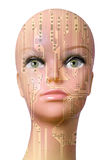 Weiblicher Cyborgkopf lokalisiert auf weißem Hintergrund Stockfotografie