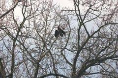 Weiblicher Eagle Drys Her Wings Lizenzfreie Stockfotos