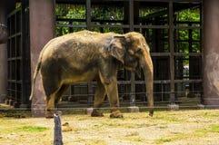 Weiblicher Elefant Stockfoto