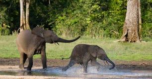 Weiblicher Elefant mit einem Baby lizenzfreies stockfoto