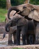 Weiblicher Elefant mit einem Baby stockfotos
