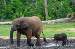 Weiblicher Elefant mit einem Baby lizenzfreie stockfotografie