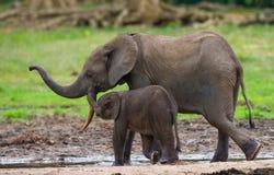 Weiblicher Elefant mit einem Baby Lizenzfreies Stockbild