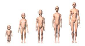 Weiblicher Entwurf des menschlichen Körpers von verschiedenen Altersstadien. Stockbilder