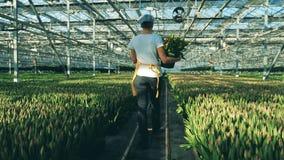 Weiblicher Florist geht entlang das Grün in einer Rückseitenansicht stock video