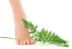 Weiblicher Fuß mit grünem Farnblatt Stockfotos