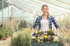 Weiblicher Gärtner, der ein Gestell von Blumen hält Stockfoto