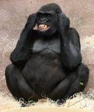 Weiblicher Gorilla Stockbild