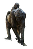Weiblicher Gorilla mit Baby. Lokalisiert auf Weiß Lizenzfreie Stockfotos