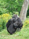 Weiblicher Gorilla mit ihrem Schätzchen Lizenzfreie Stockbilder