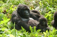 Weiblicher Gorilla mit Kind Stockbilder