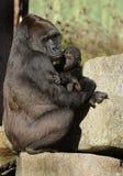 Weiblicher Gorilla mit Schätzchen Lizenzfreie Stockbilder