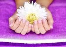 Weiblicher Hand mit Blume Lizenzfreies Stockfoto