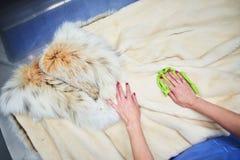 Weiblicher Handabwischenstoff für Pelz Stockbilder