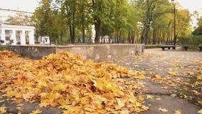 Weiblicher Hausmeister in den einheitlichen fegenden gefallenen Blättern im Park, schlecht bezahlter Job, Krise stock video
