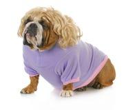 Weiblicher Hund Stockfotos