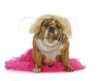 Weiblicher Hund Lizenzfreie Stockfotos