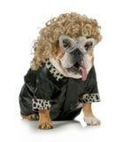 Weiblicher Hund Stockfoto