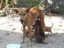 Weiblicher Hund und sieben Söhne Lizenzfreies Stockbild