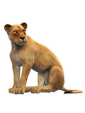 Weiblicher Löwe, Löwinsitzen, wildes Tier lokalisiert auf Weiß Stockfotografie