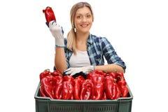 Weiblicher Landarbeiter, der hinter einer Kiste aufwirft Lizenzfreies Stockfoto