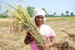 Weiblicher Landwirt stockbild