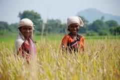 Weiblicher Landwirt stockbilder