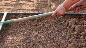 Weiblicher Landwirt, der eine Rührstange verwendet, um den braunen Boden im Garten zu planieren stock video footage
