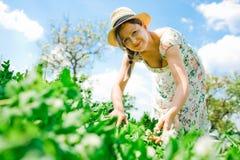 Weiblicher Landwirt im Hut ?berpr?ft, Erbsenanlage reifend stockfoto
