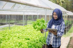 Weiblicher Landwirt mit Tablette lizenzfreie stockfotos
