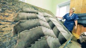 Weiblicher Schneider dreht eine Tabelle mit Stücken Pelz, Abschluss oben stock footage