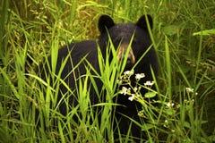 Weiblicher schwarzer Bär und Cub Stockbilder