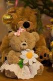 Weiblicher Teddybär Stockfoto