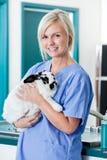 Weiblicher tierärztlicher Doktor With Rabbit Stockfotografie