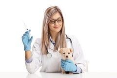 Weiblicher Tierarzt, der eine Einspritzung für einen kleinen Welpen hält stockbilder