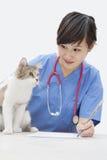 Weiblicher Tierarzt, der Katze beim Schreiben auf Papier über grauem Hintergrund betrachtet Stockfoto