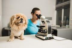 Weiblicher Tierarzt mit Hund und Mikroskop stockfotografie